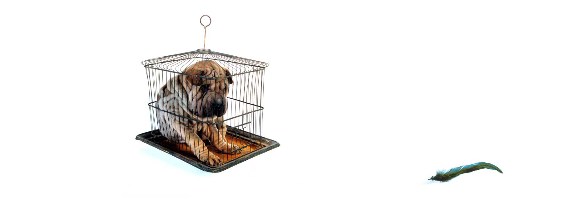 Caged Dog with Feather